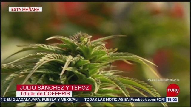 Cofepris libera 38 permisos para productos con cannabis