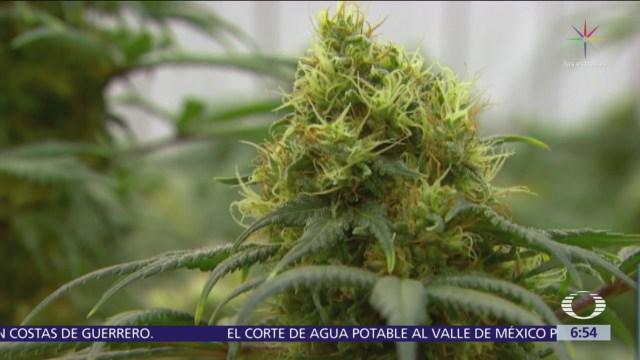 Cofepris presenta lineamientos para uso lúdico de la marihuana