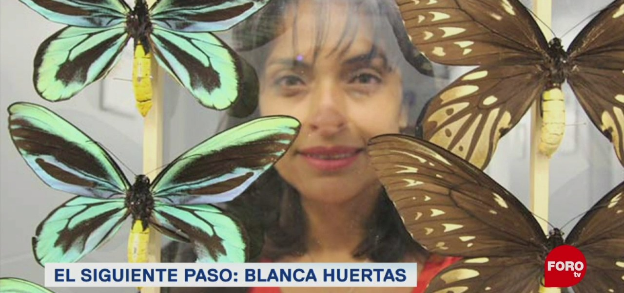Coleccionista De Mariposas Colombiana Blanca Huertas Colección Más Grande De Mariposas Museo De Historia Natural De Londres