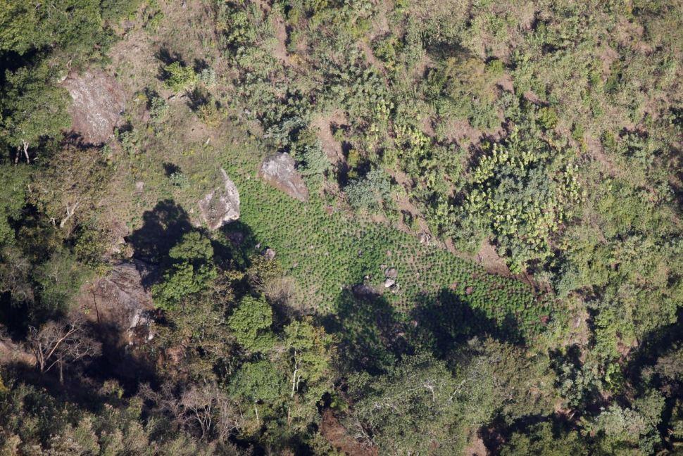 El 'Triángulo Dorado' en Durango, Sinaloa y Chihuahua, es una de las zonas con más cultivo de amapola y marihuana en México (Proceso)