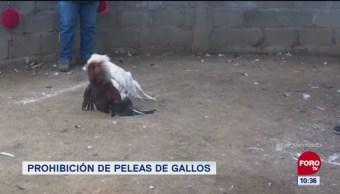 Extra, Extra: Prohibición de peleas de gallos