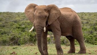 hospital-elefantes-maltratados-india-asia-imagenes
