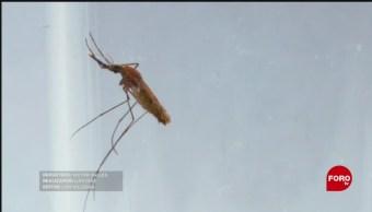 Investigan procesos que utiliza el dengue para multiplicarse en el organismo humano