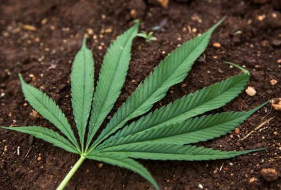 Tailandia sería primer país asiático en legalizar marihuana