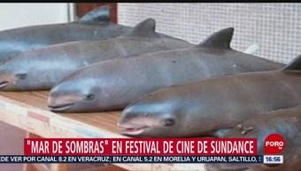 Llega un Mar de Sombras al festival de Sundance