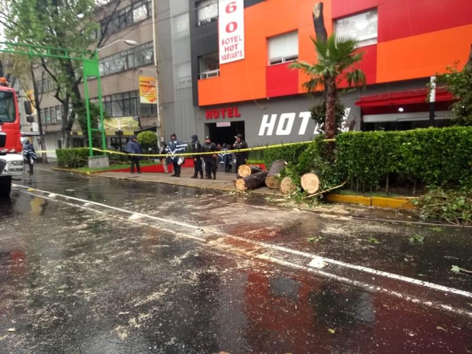 Lluvia en CDMX provoca la caída de árbol