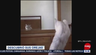 #LoViralDeLaSemana: Gato descubre sus orejas
