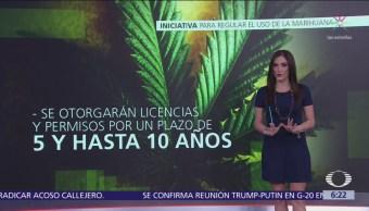 Morena presentará iniciativa para regular el uso de la marihuana
