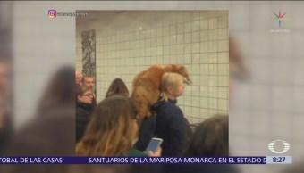 Mujer lleva zorro sobre su hombro en el tren subterráneo