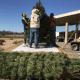 Detectan pinos con plaga de escarabajos procedentes de Oregon