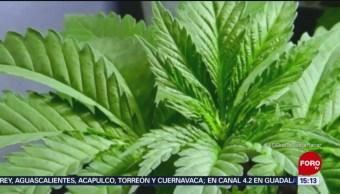 Primeros productos con cannabis en México