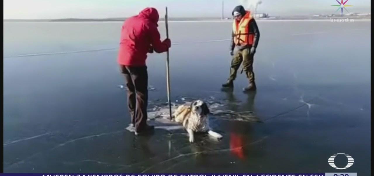 Rescatistas salvan a perro atrapado en lago congelado de Rusia