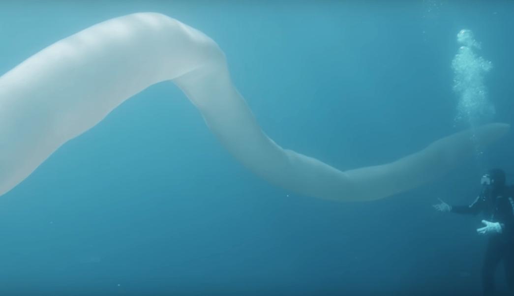 video-gusano-mar-8-metros-largo-nueva-zelanda