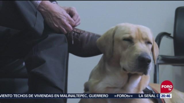 Activista Promueve Apoyar Personas Discapacidad Perros Asistencia