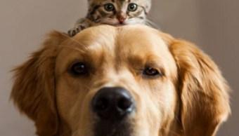 Petify, plataforma para adoptar una mascota con responsabilidad