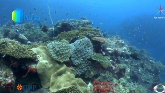Arrecifes de coral y manglares en Vamizi