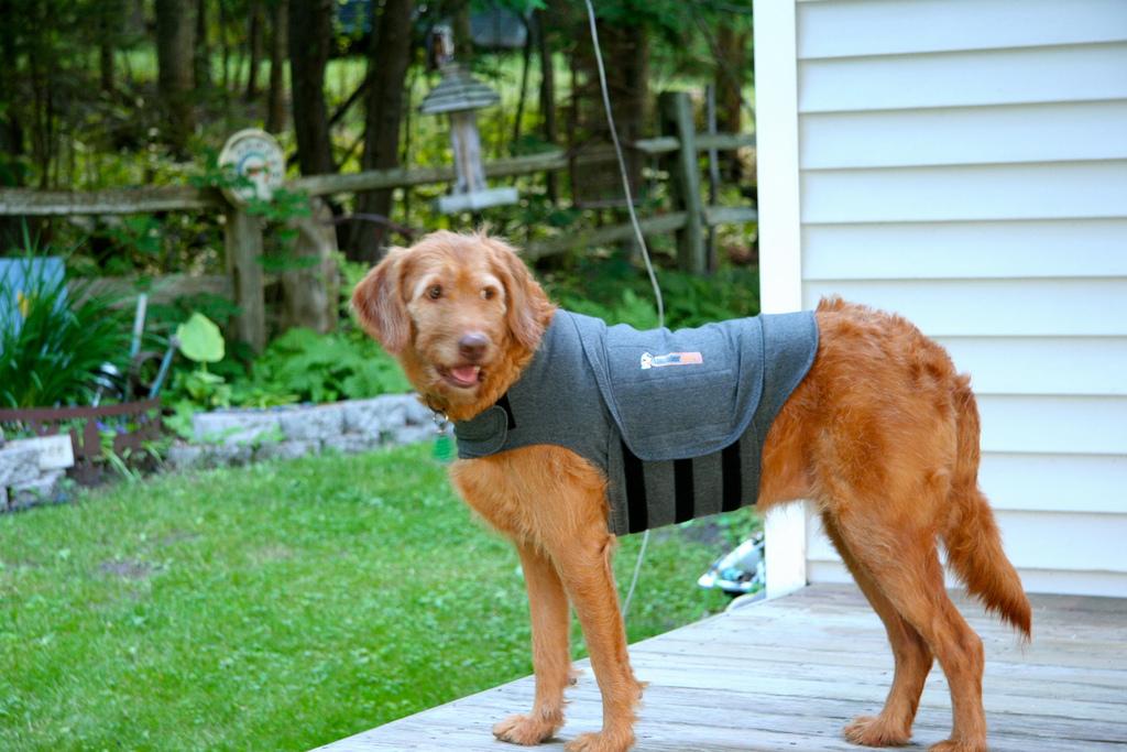 camisa-antiansiedad-perro-thundershirt