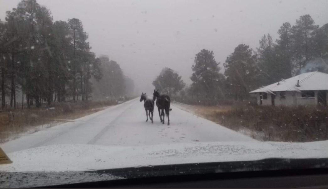Chihuahua cierra varios tramos carreteros por nevadas