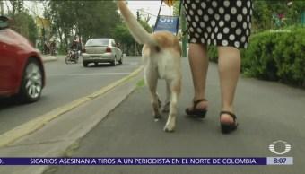 ¿Cómo evitar la discriminación de perros guías en México?
