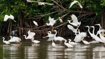 Chiapas realiza el noveno Festival de Aves Martinica 2018