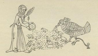 Pollo de granja moderno es irreconocible a sus ancestros