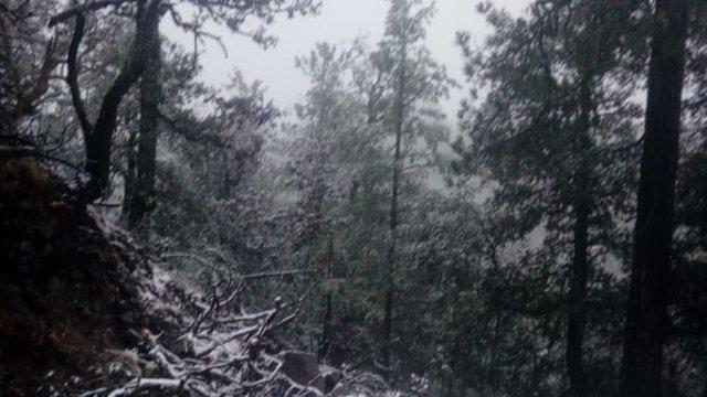 La Rosilla, en Durango, registró caída de nieve el 8 de diciembre.