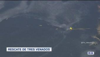 #LoQueVimosEnLaRed: Rescate de tres venados en lago congelado