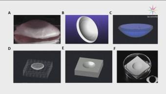 Científicos Británicos Crean Corneas Artificiales Impresora 3d