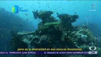 Manglares y corales de Isla Vamizi, joyas de 'jardines del mar'