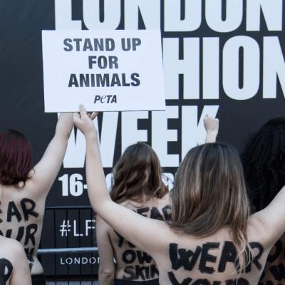 PETA despierta polémica por refranes sobre animales, pide cambiarlos para no discriminar