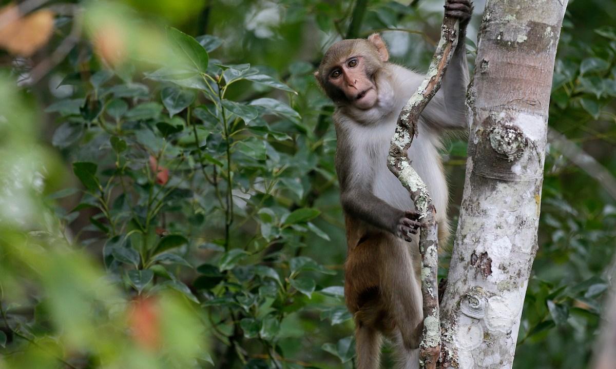 Mujer Mastubró Mono Condenada 3 Años Cárcel