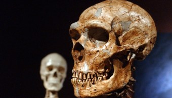Forma Cráneo ADN Neandertal Humanos Cráneos
