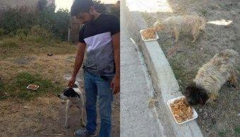 Alistan operativo para alimentar a perros de la calle