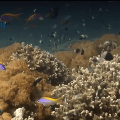 Isla Vamizi, donde florecen los 'jardines del mar'