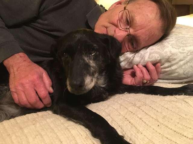 perrita-anciana-enferma-encuentra-familia-adoptiva-twitter