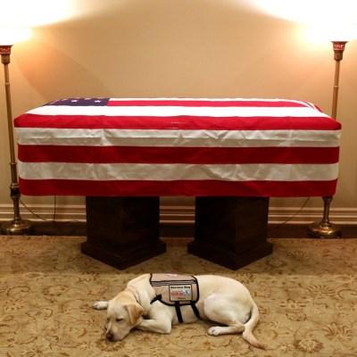 'Sully', el fiel perro de George H.W. Bush lo acompaña en su último viaje a Washington