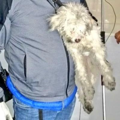 Rescatan a un perro en vías del Metro Moctezuma en la CDMX