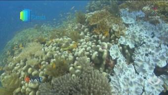 Por El Planeta Blanqueamiento Corales Isla Vamizi