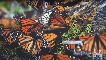 Proyectos sustentables en favor de la mariposa monarca
