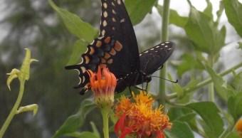 Texas: Demolerán santuario de mariposas por 'muro de Trump'