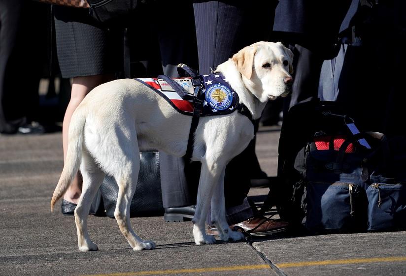 'Sully', el perro de servicio con el ataúd George H.W. Bush