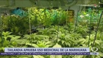 Tailandia da luz verde a uso medicinal de la marihuana