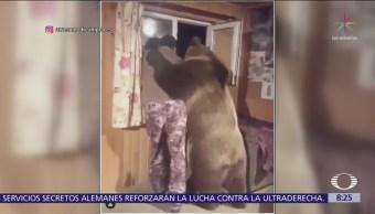 Un oso, el mejor amigo de un hombre en Rusia