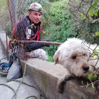 Brigada de Vigilancia Animal rescata a perro en barranca de la CDMX