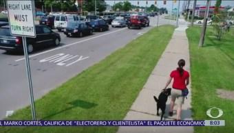 Urgen al Senado aprobar ley que permite acceso de perros guías a transportes