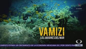 'Vamizi, los jardines del mar', Por el Planeta nos lleva a Mozambique