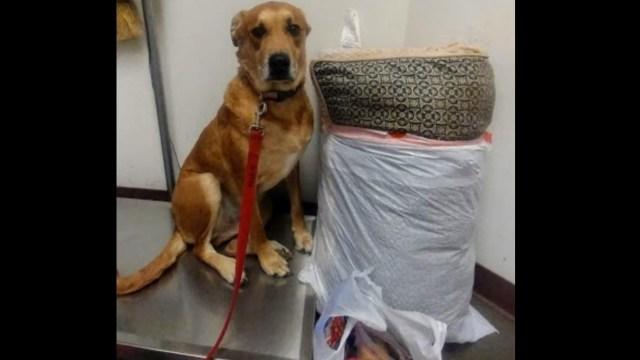 El abandono de 'Wall-E', el perro que regresaron con todas sus cosas al albergue donde fue adoptado