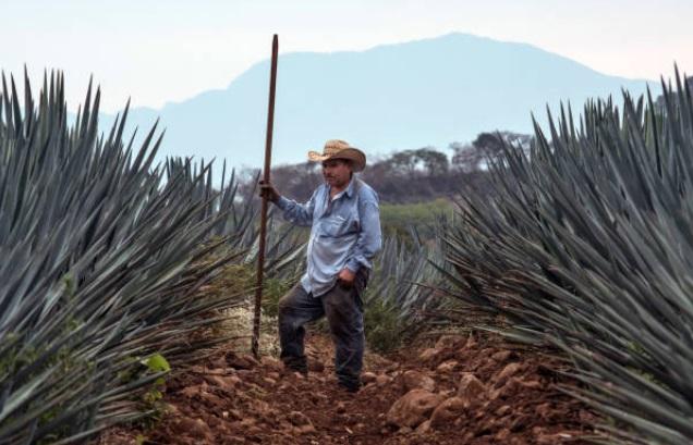 Industria de tequila rompe récord de exportaciones en 2018