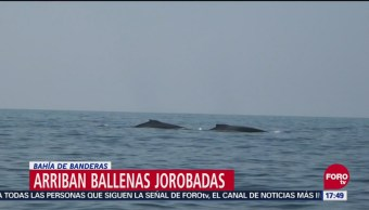 Ballenas Llegan Frente A Bahía De Banderas, Ballenas, Bahía De Banderas, Nayarit, Grupos Ecologistas, Proteger A Los Cetáceos