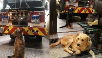 Bomberos dan refugio a perros callejeros durante llegada del Año Nuevo